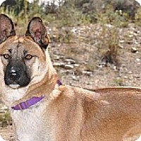 German Shepherd Dog Mix Dog for adoption in Newport Beach, California - Nevada