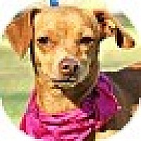 Adopt A Pet :: Charlotte - Conway, AR