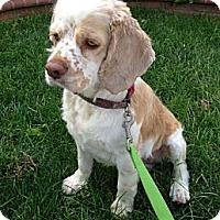 Adopt A Pet :: Missy - Inglewood, CA