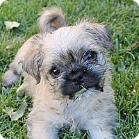 Adopt A Pet :: Pretzel - La Habra Heights, CA
