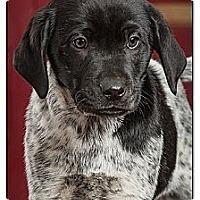 Adopt A Pet :: Kingston - Owensboro, KY