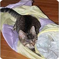 Adopt A Pet :: Helen - Muncie, IN