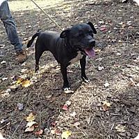 Adopt A Pet :: Jeramiah - Wanaque, NJ