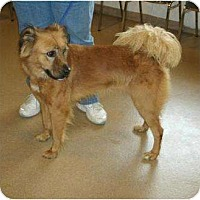 Adopt A Pet :: Sicly - Toronto/Etobicoke/GTA, ON