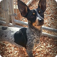 Adopt A Pet :: HearMe - Alamogordo, NM
