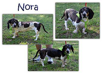 Basset Hound Dog for adoption in Marietta, Georgia - Nora
