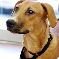 Hound (Unknown Type) Mix Dog for adoption in Beaumont, Texas - Milo