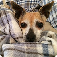Adopt A Pet :: Abby - Knoxville, TN
