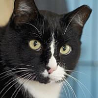 Adopt A Pet :: Tux - LaGrange, KY