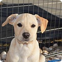 Adopt A Pet :: Whisper - Allen town, PA