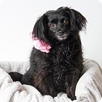 Adopt A Pet :: *CHERRY - Sacramento, CA