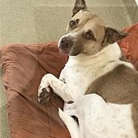 Adopt A Pet :: S/C Checkers - Miami, FL