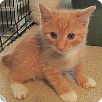 Adopt A Pet :: Ohio - Acme, PA
