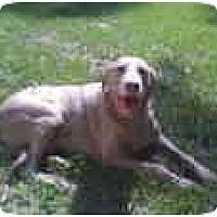 Adopt A Pet :: Sky  **ADOPTED** - Eustis, FL