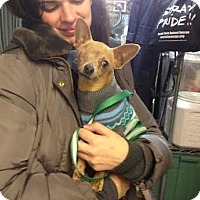 Adopt A Pet :: Petey - Manhattan, NY