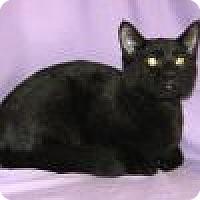 Adopt A Pet :: Ebony - Powell, OH