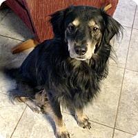 Adopt A Pet :: Zeke - Las Vegas, NV