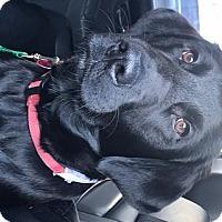 Adopt A Pet :: Rhino - Evergreen, CO