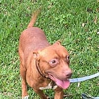 Adopt A Pet :: Buddy - Beaumont, TX