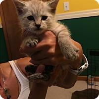 Adopt A Pet :: Litter 3 - Daleville, AL