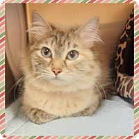 Adopt A Pet :: SHELLIE-available 4/25 - Marietta, GA