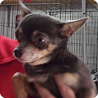 Adopt A Pet :: Paco - Jamestown, TN