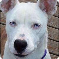 Adopt A Pet :: Loubell - Covington, KY