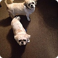 Adopt A Pet :: Sissy and Bubby - Linton, IN