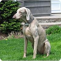 Adopt A Pet :: Mandy - Attica, NY