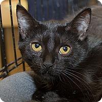 Adopt A Pet :: Mia - Irvine, CA
