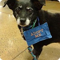 Adopt A Pet :: William - Phoenix, AZ
