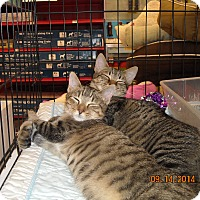 Adopt A Pet :: Max and Milo - Riverside, RI