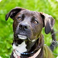 Adopt A Pet :: Daisy - Mohawk, NY