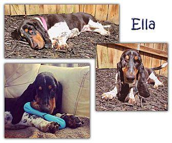 Basset Hound Mix Dog for adoption in Marietta, Georgia - Ella