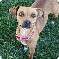 Adopt A Pet :: Phoebe - 15 lbs! - Yorba Linda, CA