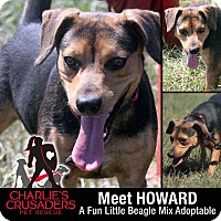 Adopt A Pet :: Howard - Spring City, PA