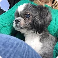 Adopt A Pet :: Fizzie - Bridgewater, NJ
