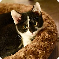 Adopt A Pet :: Calamity Jane - Covington, KY