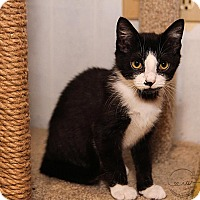 Adopt A Pet :: A..  Emerson - Mooresville, NC