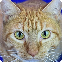 Adopt A Pet :: Mandarin - Friendswood, TX