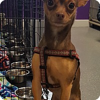 Adopt A Pet :: Timmy - Indianapolis, IN