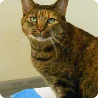 Adopt A Pet :: Aspen - Lancaster, PA
