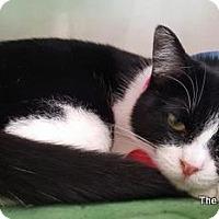 Adopt A Pet :: Blanna - Parlier, CA