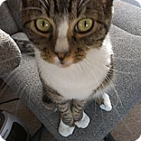 Adopt A Pet :: Nubbers - San Diego, CA