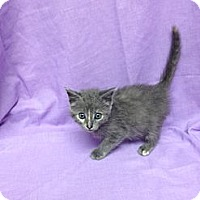 Adopt A Pet :: Veruga - Orlando, FL