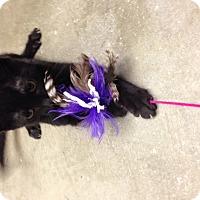 Adopt A Pet :: Boris - Simpsonville, SC