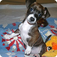 Adopt A Pet :: Gretal - Homewood, AL