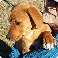 Adopt A Pet :: Gracie - Orange Lake, FL