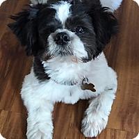 Adopt A Pet :: CHOPSTIX - Los Angeles, CA