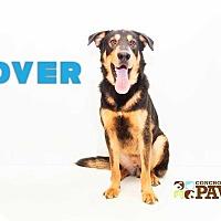 Adopt A Pet :: Rover - San Angelo, TX
